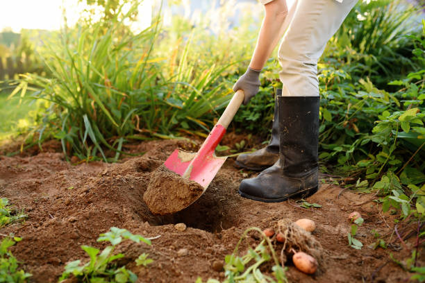 Állásajánlat kertész munkakörre